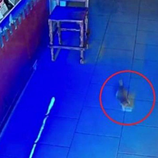 Viral!!, Video Anak Kucing Tertangkap Basah Curi Segepok Duit